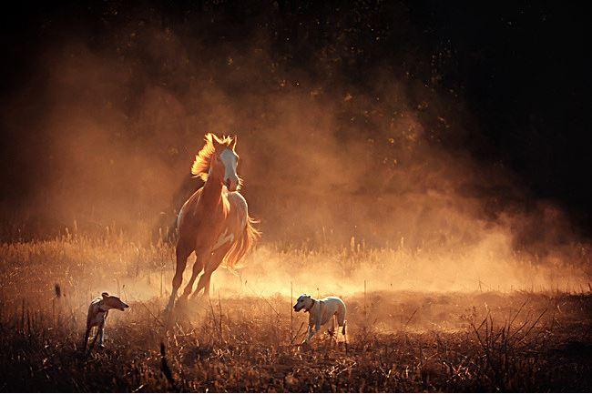 Horse Saints Group of Todos Santos
