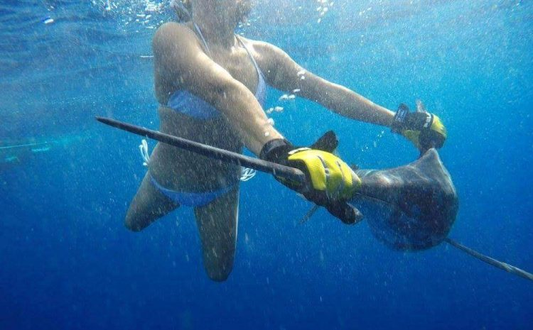 Pelagic Life in Baja