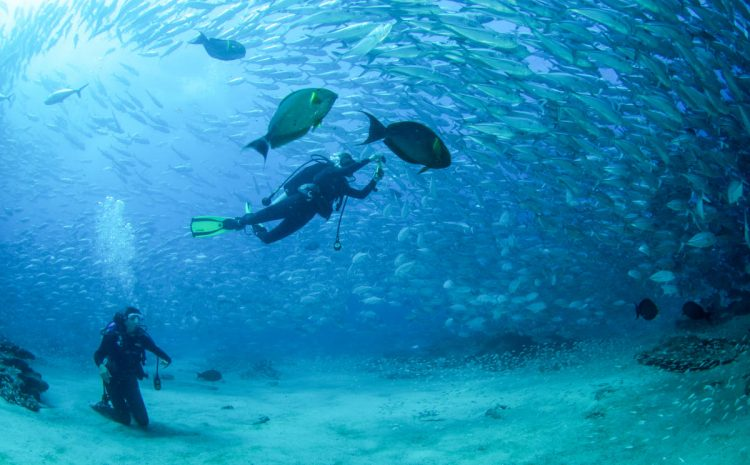 New PADI 5 Star IDC Dive Center Opens in Cabo