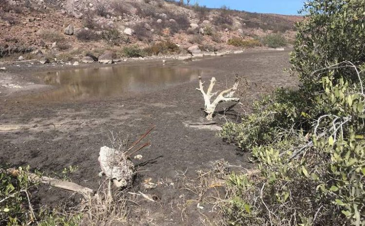 Federal Government Damages Mangrove in La Paz
