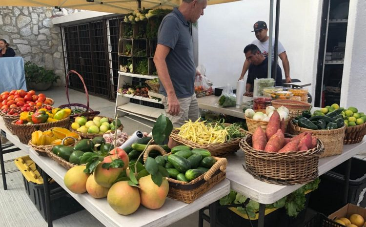 The Organic Market at the Pedregal is Back!