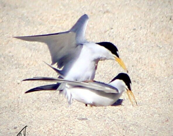 Please Do Not Fly Drones Over Birds Nests
