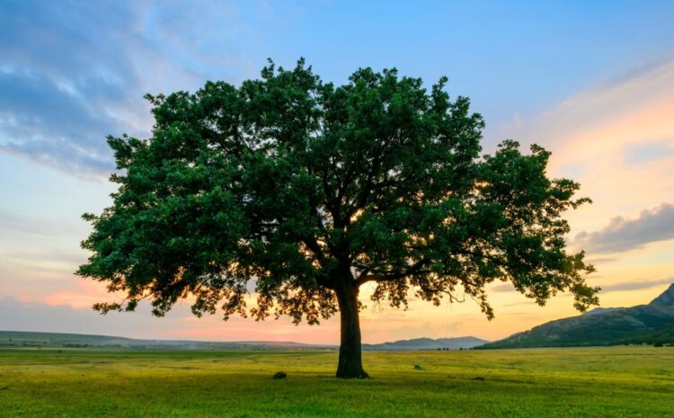 Four Ways Trees Add Value to Your Property