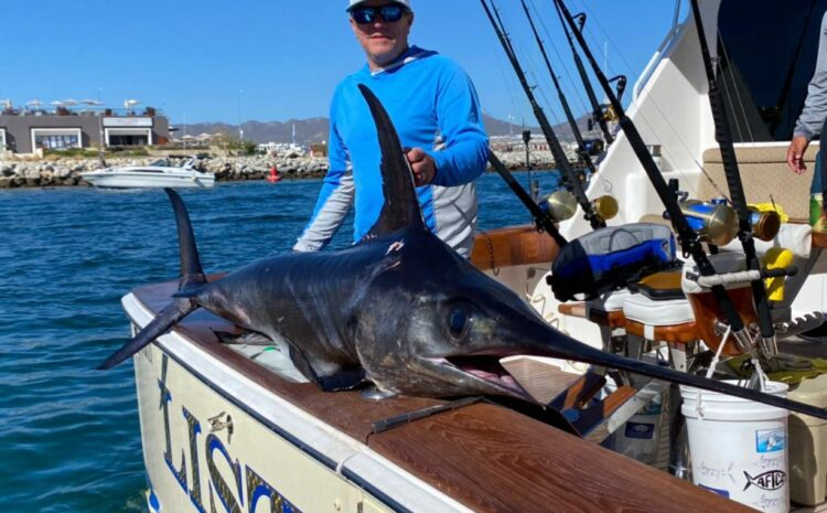 How Important is Sportfishing for Cabo?