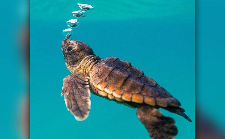 Sea Turtles Get New Equipment