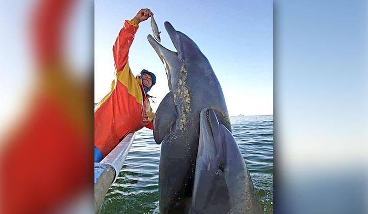 Fishermen Caught Feeding Dolphins